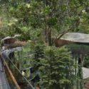Mandai Resort treehouse